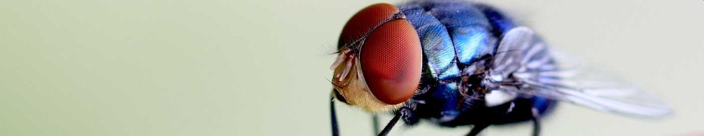 Pest Control St Albans